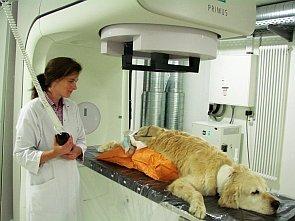Tumortherapie_beim_Hund_im_Tiergesundheitszentrum_Grussendorf_295