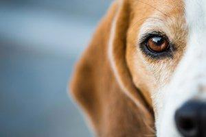 Ratgeber Hund