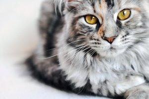 Ratgeber Katze