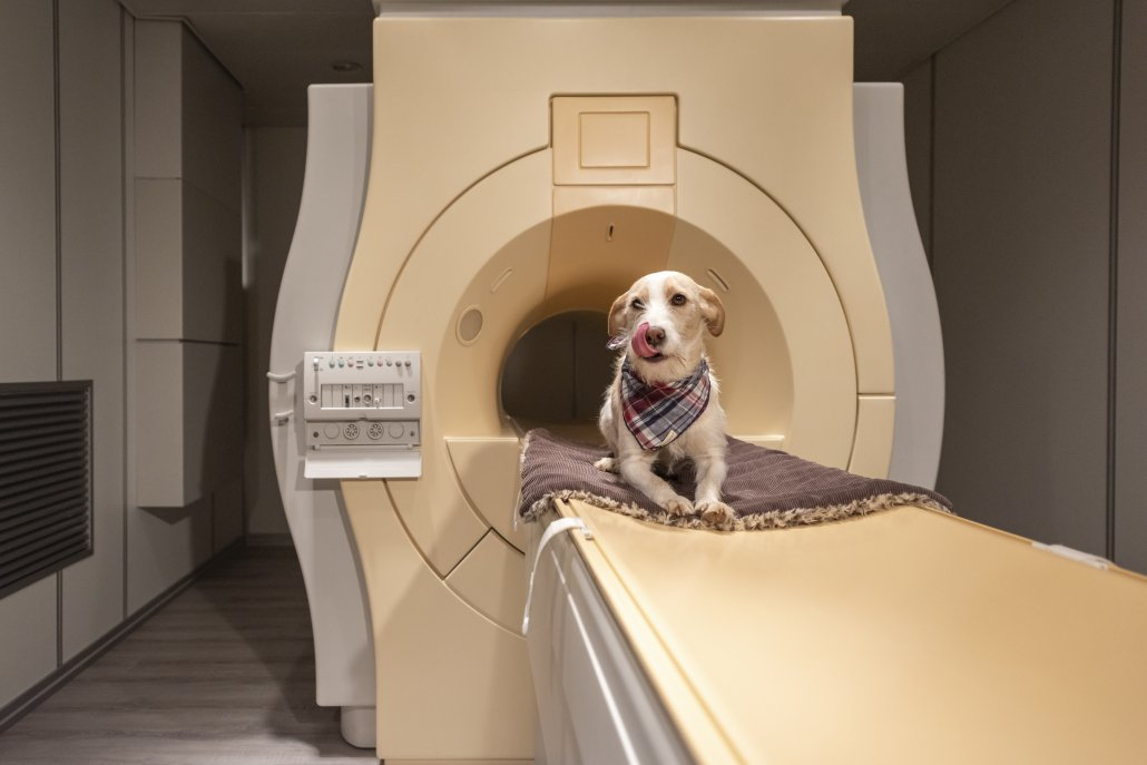 MRT - Magnetresonanztomographie
