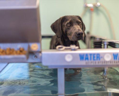 Physiotherapie Wasserlaufband